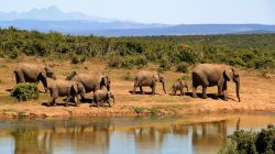 Elephant Herd Africa Water Hole Photo