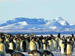 Emperor Penguins In Antarctica Photo