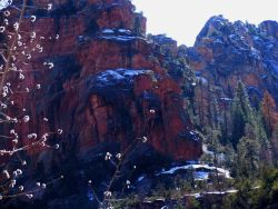 Desert colors of red and yellow sandstone, pines, and snow in Oak Creek Canyon. Photo