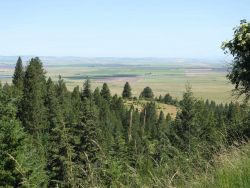 Looking out towards Camas Prairie from U.S Photo