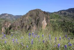 Purple wildflowers with mountainous terrain at Lassen National Volcanic Park Photo