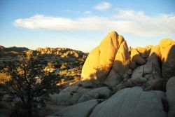 Granitic boulders lit up in the late afternoon sun at Joshua Tree National Monument. Photo