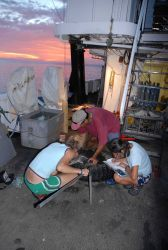 Scientists taking measurements of sea turtle on the NOAA Ship DAVID STARR JORDAN . Photo