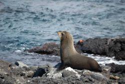 Fur seal. Photo
