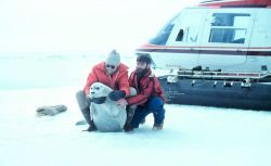 Helicopter transport for scientists during seal tagging operations Photo