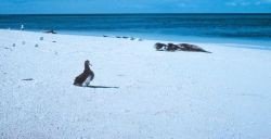 Albatross chick, monk seals and Japanese glass fishing floats. Photo