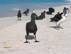 Albatrosses. Photo