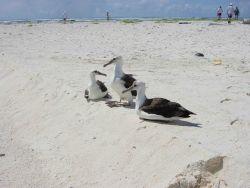 Albatross. Photo
