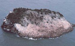 Walrus herd ? on island. Photo