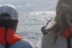 Orca or killer whales seen from boat off DAVID STARR JORDAN. Photo
