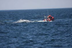 Disentangling right whale from fishing gear Photo