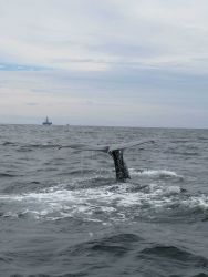 Sperm whale flukes Photo