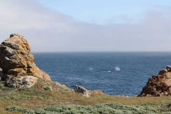 A view of two gray whale blows Image