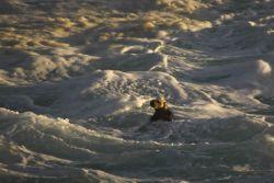 Sea otter in the foam Photo