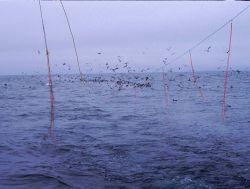 Tied ropes on trawl line keep marine birds away. Photo
