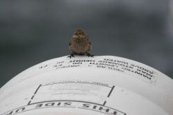 A small land bird checking out a life raft on the NOAA Ship DAVID STARR JORDAN just in case. Photo