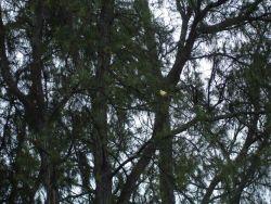A canary Photo