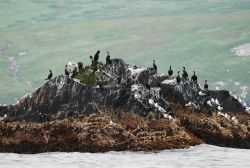 Gulls and cormorants perched on an offshore rock Photo