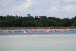 Flamingos on the Yucatan Peninsula. Photo