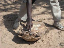 Female tortoise Photo