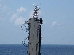 Terns and gulls on ship's crane. Photo
