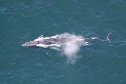 Fin whale Photo