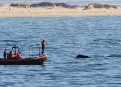 Studying North Atlantic Right Whales off Race Point. Photo