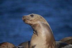 Sea lion. Photo