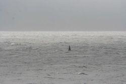 Killer whale. Photo