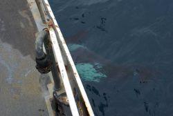 Killer whale alongside ship. Photo