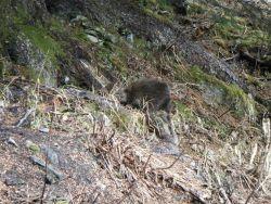 Porcupine. Photo