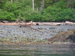 Black bear strolling near the water Photo