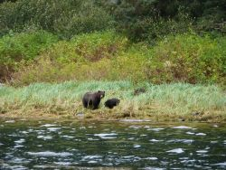 Mother black bear and cub strolling on the shore. Photo