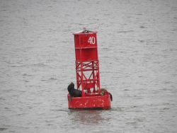 Sea lions. Photo
