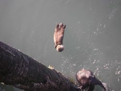Sea otter mother and baby. Photo