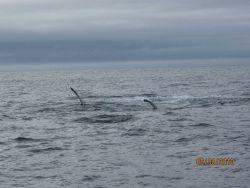 Humpback whale Photo