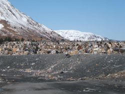 Eagles at the dump on Kodiak Island. Photo