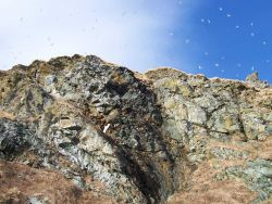 Possibly kittiwakes flying high above the cliffs of Little Diomede Island. Photo