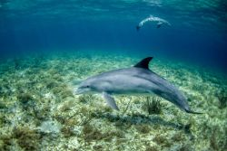 A pair of dolphin Photo