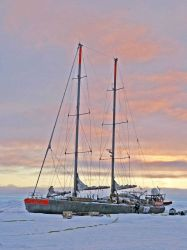 The French sailing vessel TARA which will intentionally be frozen in the ice for two years in order to conduct Arctic climate and oceanographic studie Photo