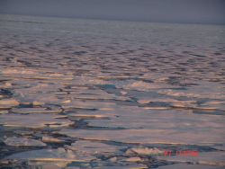 First year ice melting and breaking apart in late summer. Photo