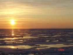 Ice floes, melt ponds and a golden sun. Photo