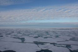 First year ice disintegrating into floes at the end of summer. Photo