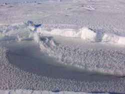 A refrozen fracture with nilas ice and frost flowers Photo