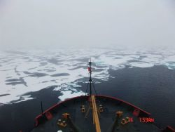 Approaching ice floes and melt pools from the edge of a polynya. Photo