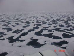 A vast expanse of interlocking melt pools. Photo