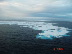 An ice floe in a large polynya. Photo