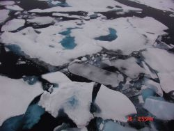 Ice floes with brash ice in the intervening spaces. Photo