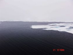 Ice floes on the edge of a polynya. Photo