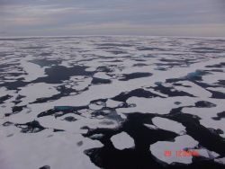 Relatively smooth ice floes in first-year ice. Photo